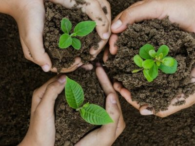 Seventh-day Adventists are now in the Reforestation Business
